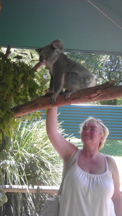 Eindelijk een Koala in het echt zien.
