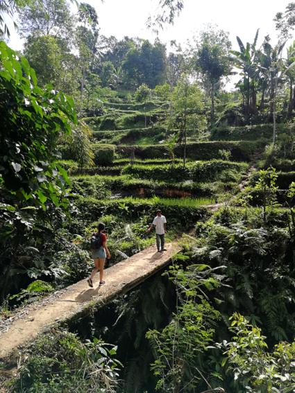 Tussen de rijstvelden van Lombok