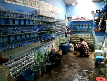 Viswinkel op Java (voornamelijk guppies is potjes)