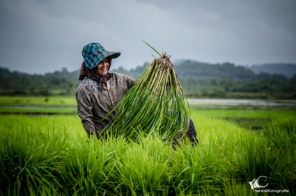 werken op het rijstveld