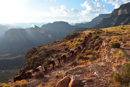 Muilezels zorgen voor bevoorrading in Grand Canyon