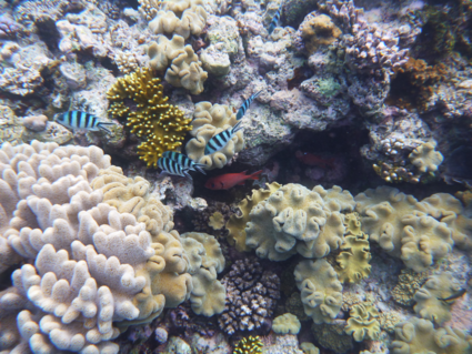 Snorkelen op het Great Barrier Reef