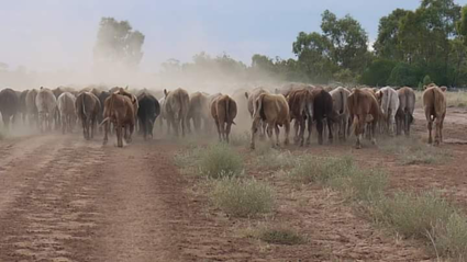 Veedrijven in Queensland