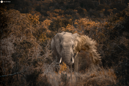 Prachtige olifant verstopt in de bomen