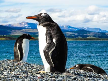 Pinguïns op het einde van de wereld