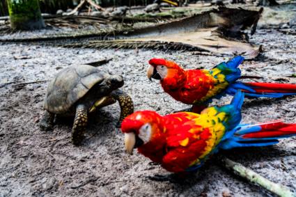 Schildpad en papegaaien in de jungle