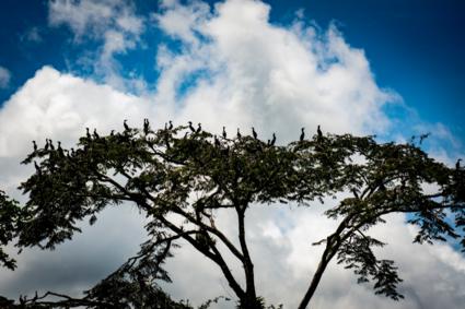 Vogelstad in de Amazone