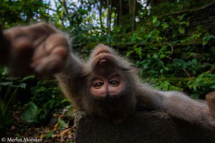 Aap maakt eigen selfie