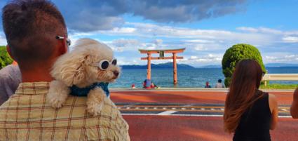Japan de gekste dingen