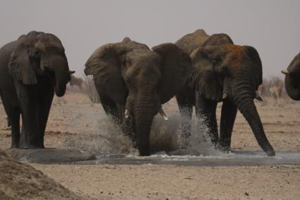 Enjoying Africa's liquid gold