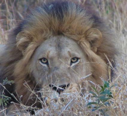 Krugerpark 6.00 in de ochtend.